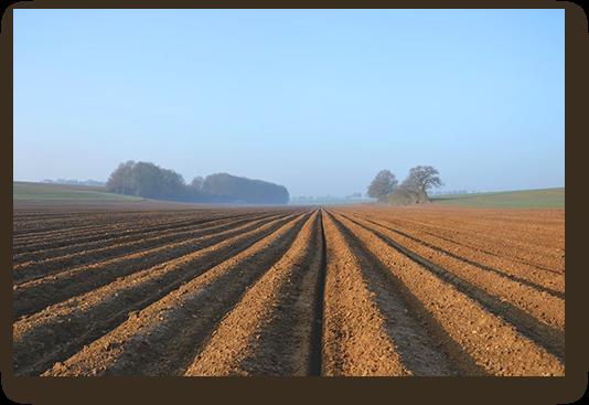 vendre pomme de terre - cooperative agricole