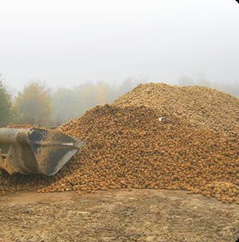 chiffre cle - nombre d'haderent - prix des pommes de terre - cooperative Vecquemont